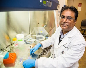 Laxman Gangwani, Ph.D., associate professor at Texas Tech University Health Sciences Center El Paso, is studying how the enzyme JNK3 plays a role in spinal muscular atrophy. Photo by Raul De La Cruz/TTUHSC El Paso.