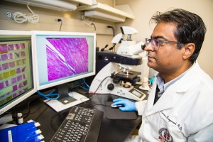 Laxman Gangwani, Ph.D., reviews images of the muscles of mice with spinal muscular atrophy. Gangwani is studying how inhibition of the JNK3 enzyme could reduce muscle degeneration associated with the disease. Photo by Raul De La Cruz/TTUHSC El Paso.